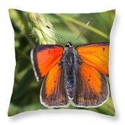18 Balkan Copper Butterfly Throw Pillow