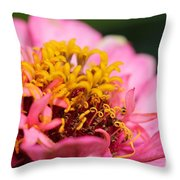 Zinnia From The Candy Mix Throw Pillow