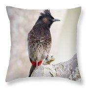 Birds Of The World Throw Pillow