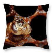 A Honeybee Hive After Colony Collapse Throw Pillow