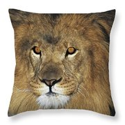 African Lion Portrait Wildlife Rescue Throw Pillow