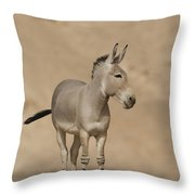 African Wild Ass Equus Africanus Throw Pillow