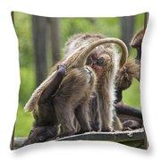 Almost Human    Gelada Baboons Throw Pillow