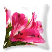 Alstroemeria Flowers Against White Throw Pillow