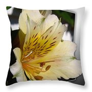 Alstroemeria Named Marilene Staprilene Throw Pillow