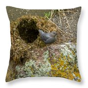 American Dipper And Nest   #1487 Throw Pillow