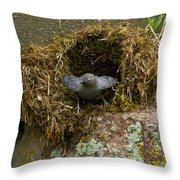 American Dipper And Nest   #1538 Throw Pillow