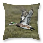 American Wigeon Drake Throw Pillow