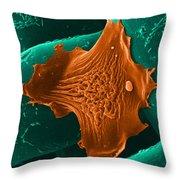 Amoeba Crawling On Nylon Mesh, Sem Throw Pillow by David M. Phillips