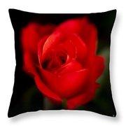 Amore Mio Throw Pillow
