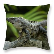 An Iguana Sunbathes In The Ancient Throw Pillow