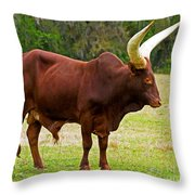 Ankole-watusi Cattle Throw Pillow