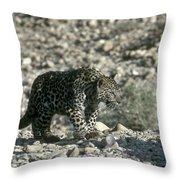 Arabian Leopard Panthera Pardus 1 Throw Pillow