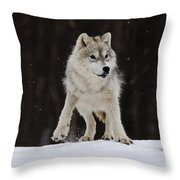 Arctic Wolf Throw Pillow