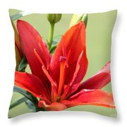 Asiatic Lily Named Red Twin Throw Pillow