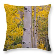 Aspen Trees In A Forest, Telluride, San Throw Pillow