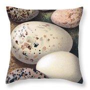 Assorted Birds Eggs, Historical Art Throw Pillow