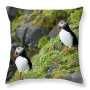 Atlantic Puffin, Fratercula Arctica Throw Pillow