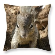Baby Rock Squirrel Throw Pillow