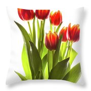 Backlit Tulip Flowers Against White Throw Pillow