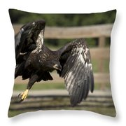 Bald Eagle In Flight Photo Throw Pillow