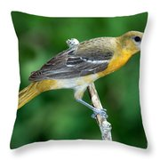 Baltimore Oriole Icterus Galbula Throw Pillow