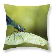 Banded Demoiselle Digital Art Throw Pillow