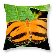 Banded Orange Butterfly Throw Pillow