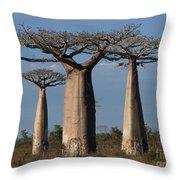 baobabs of Madagascar Throw Pillow