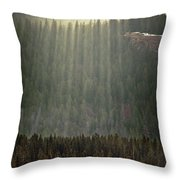 Beams Of Sunlight Shine Over Old Growth Throw Pillow