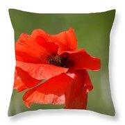 Beautiful Poppies 3 Throw Pillow