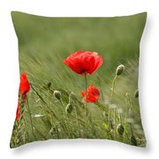 Beautiful Poppies 4 Throw Pillow