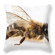 Bee Species Apis Mellifera Common Name Western Honey Bee Or Euro Throw Pillow