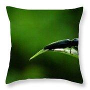 Beetle At Sunrise Throw Pillow