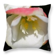 Begonia Named Nonstop Apple Blossom Throw Pillow