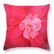 Begonia Named Nonstop Pink Throw Pillow