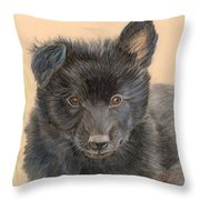 Belgian Sheepdog Puppy Throw Pillow
