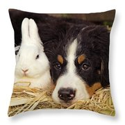 Bernese Mountain Puppy And Rabbit Throw Pillow