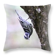 Black And White Warbler Throw Pillow