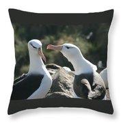 Black Browed Albatross Pair Throw Pillow