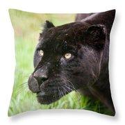 Black Jaguar  Throw Pillow
