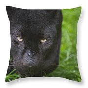 Black Leopard  Throw Pillow