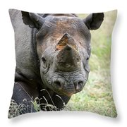 Black Rhinoceros Diceros Bicornis Michaeli In Captivity Throw Pillow by Matthew Gibson
