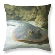 Blue Spotted Fantail Ray  Throw Pillow