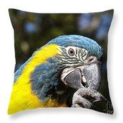 Blue Throat Macaw Throw Pillow