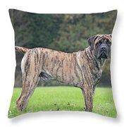 Boerboel Dog Throw Pillow