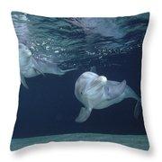 Bottlenose Dolphin  Pair Hawaii Throw Pillow