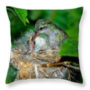 Broad-billed Hummingbird And Young Throw Pillow