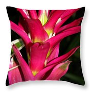 Bromelia Throw Pillow