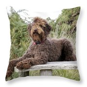 Brown Labradoodle Throw Pillow